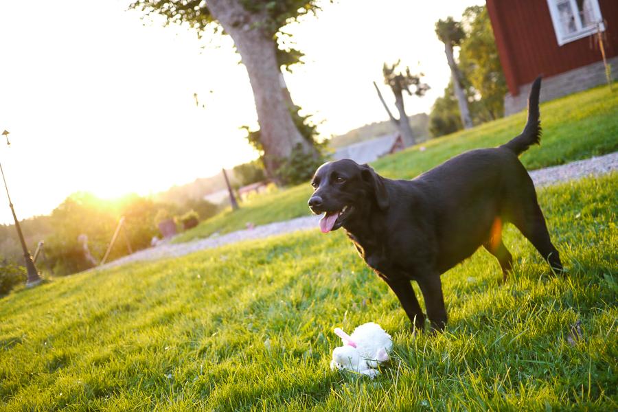 Wilma i solen