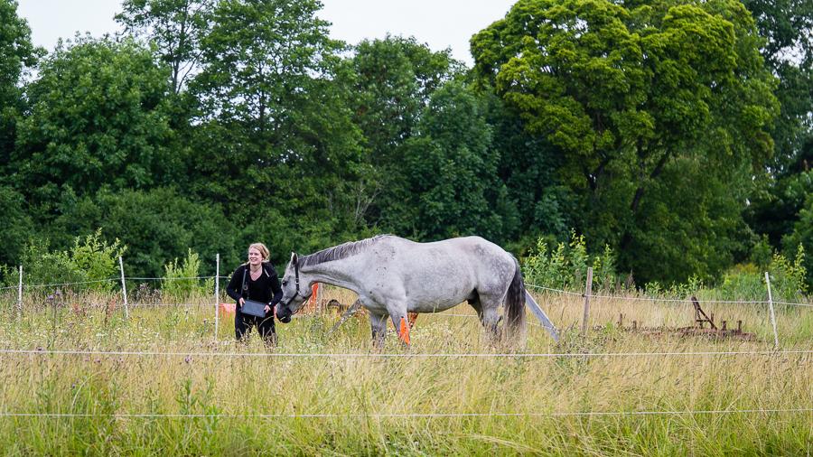 Lina i hästhage